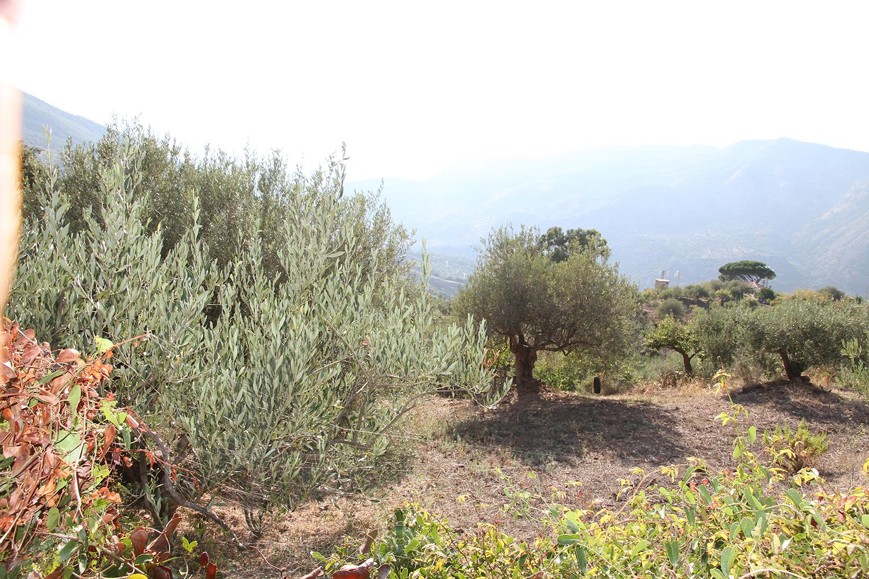 madonien gebirge olivenoel don pippino